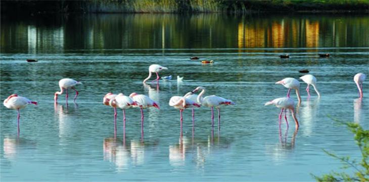 Amasya Kuş Cenneti